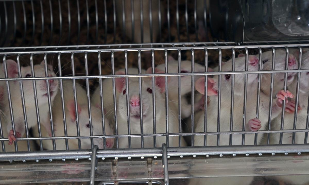 """""""No es ético, los animales no son nuestros para usarlos en experimentos"""""""